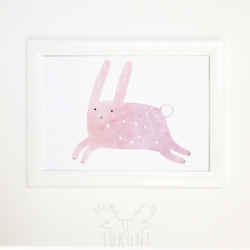 starry rabbit
