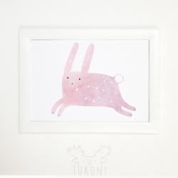 зоряний заєць